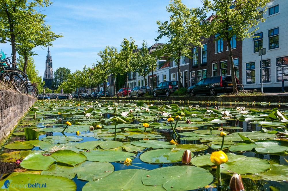 Verwersdijk in Delft. Foto gemaakt voor Oog op Delft.